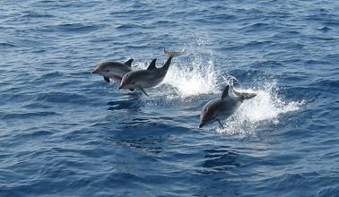 delfines en Mazarrón