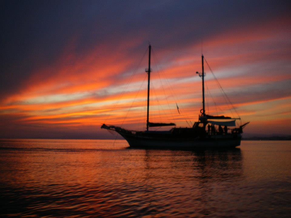 Cetaceos-&-Navegación-10-años