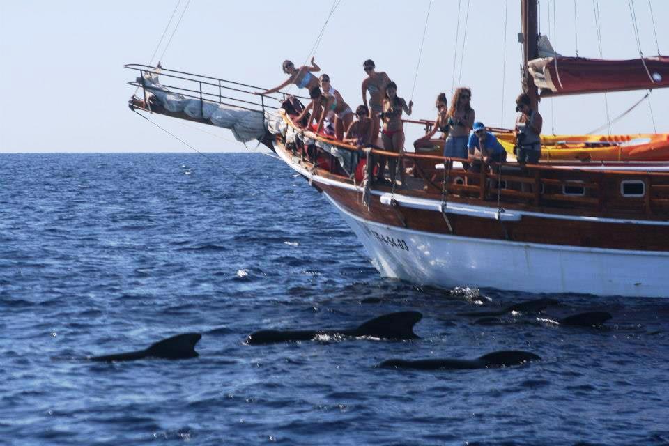 Cetaceos-&-Navegación-Condiciones-generales