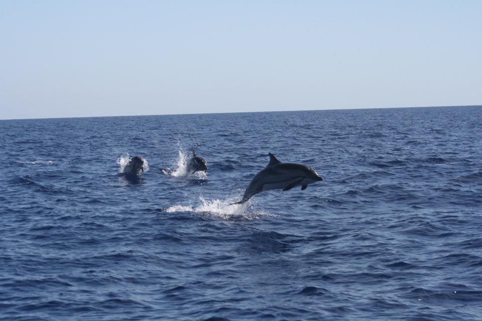 Cetaceos-&-Navegación-Delfines-listados