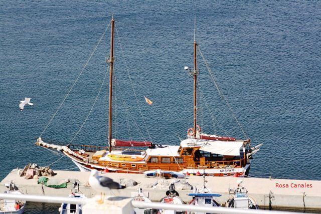 Cetaceos-&-Navegacion-Consejos-antes-de-embarcar