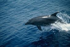 Cetaceos-&-Navegacion-Delfines-mular