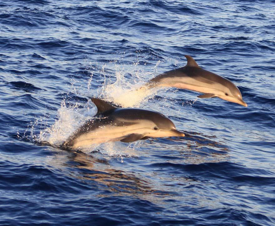 Cetaceos-&-Navegacion-Delfines