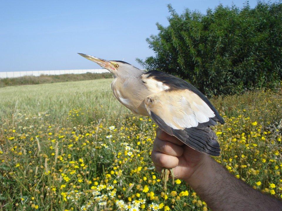 Cetaceos-&-Navegacion-garcilla-bueyera