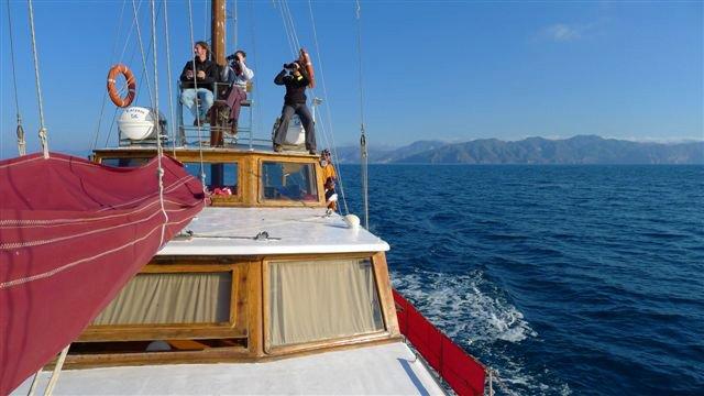 Cetaceos-&-Navegacion-Investigación