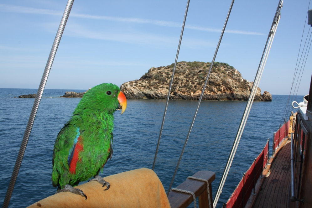 Cetaceos-&-Navegacion-Malaspina