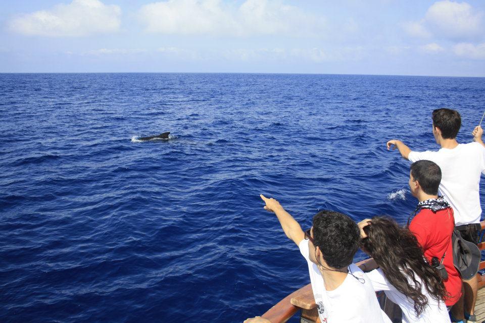 Cetaceos-&-Navegacion-Ruta-puente-diciembre
