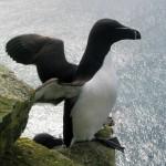 Cetaceos-&-Navegacion-alca