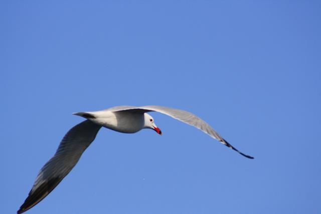 Cetaceos-&-Navegacion-aves-marinas