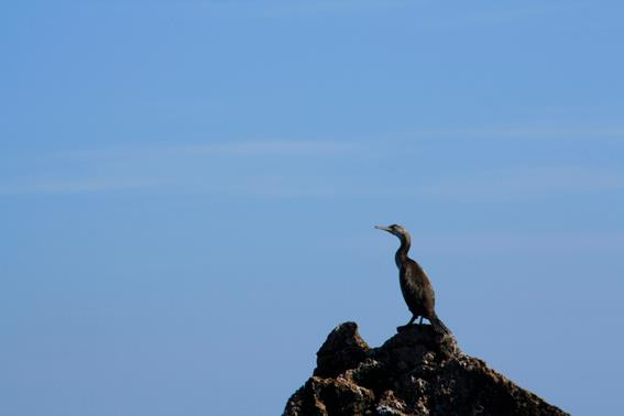 Cetaceos-&-Navegacion-cormoran