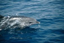 Cetaceos-&-Navegacion-delfin-mular