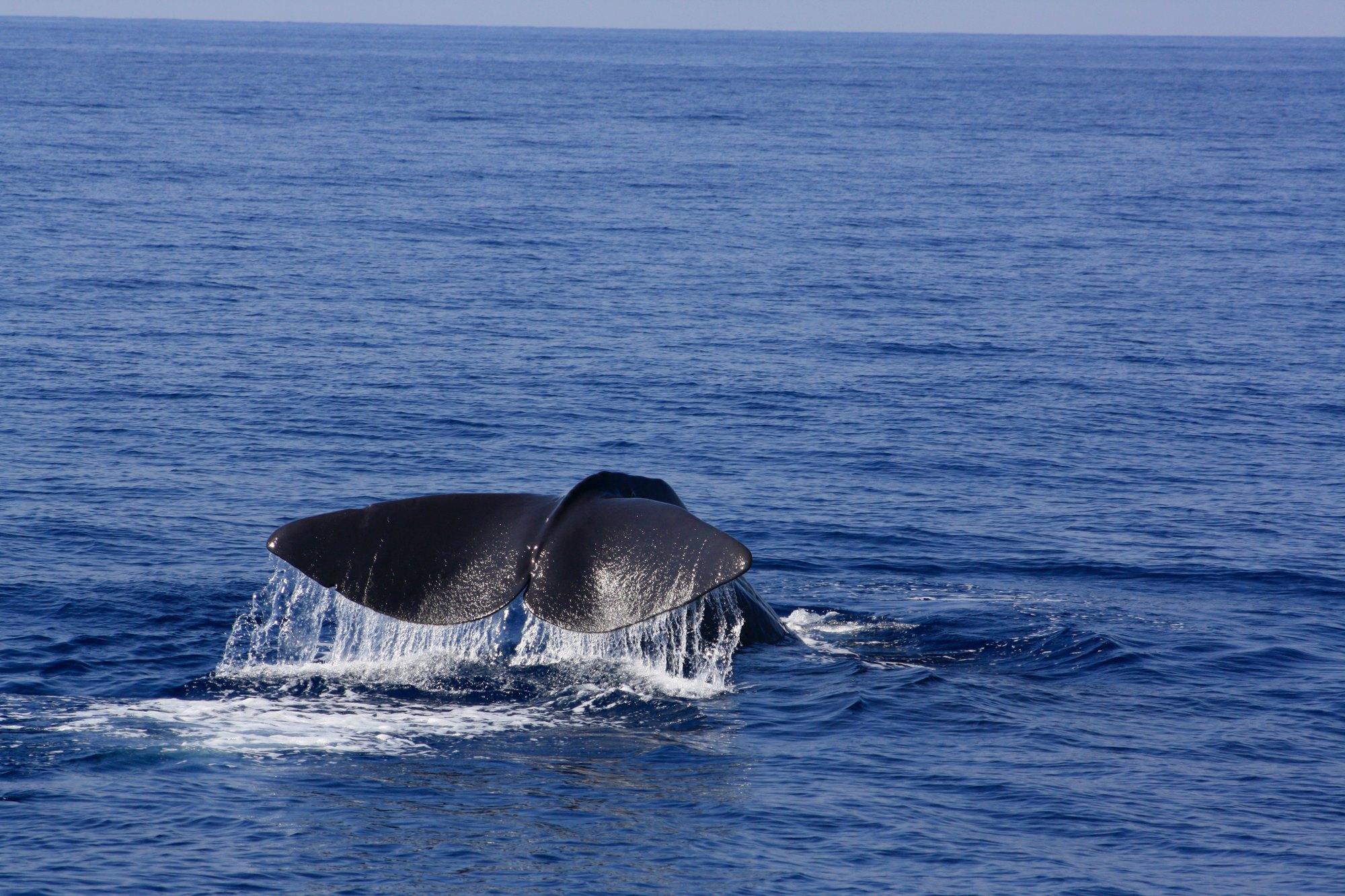 Cetaceos&Navegacion-identificacion-cetaceos