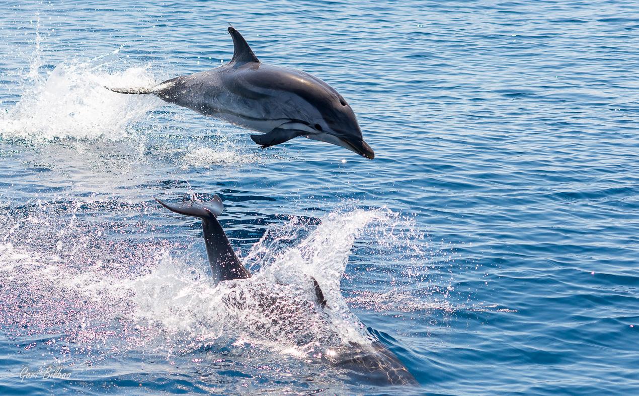 delfin listado