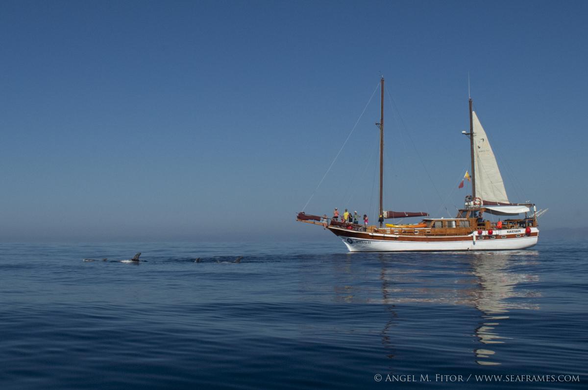 KARYAM avistando cetaceos