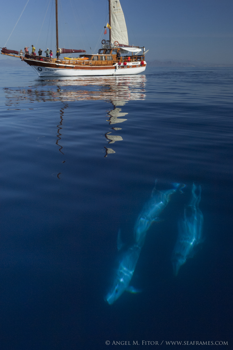 KARYAM and the cetaceans