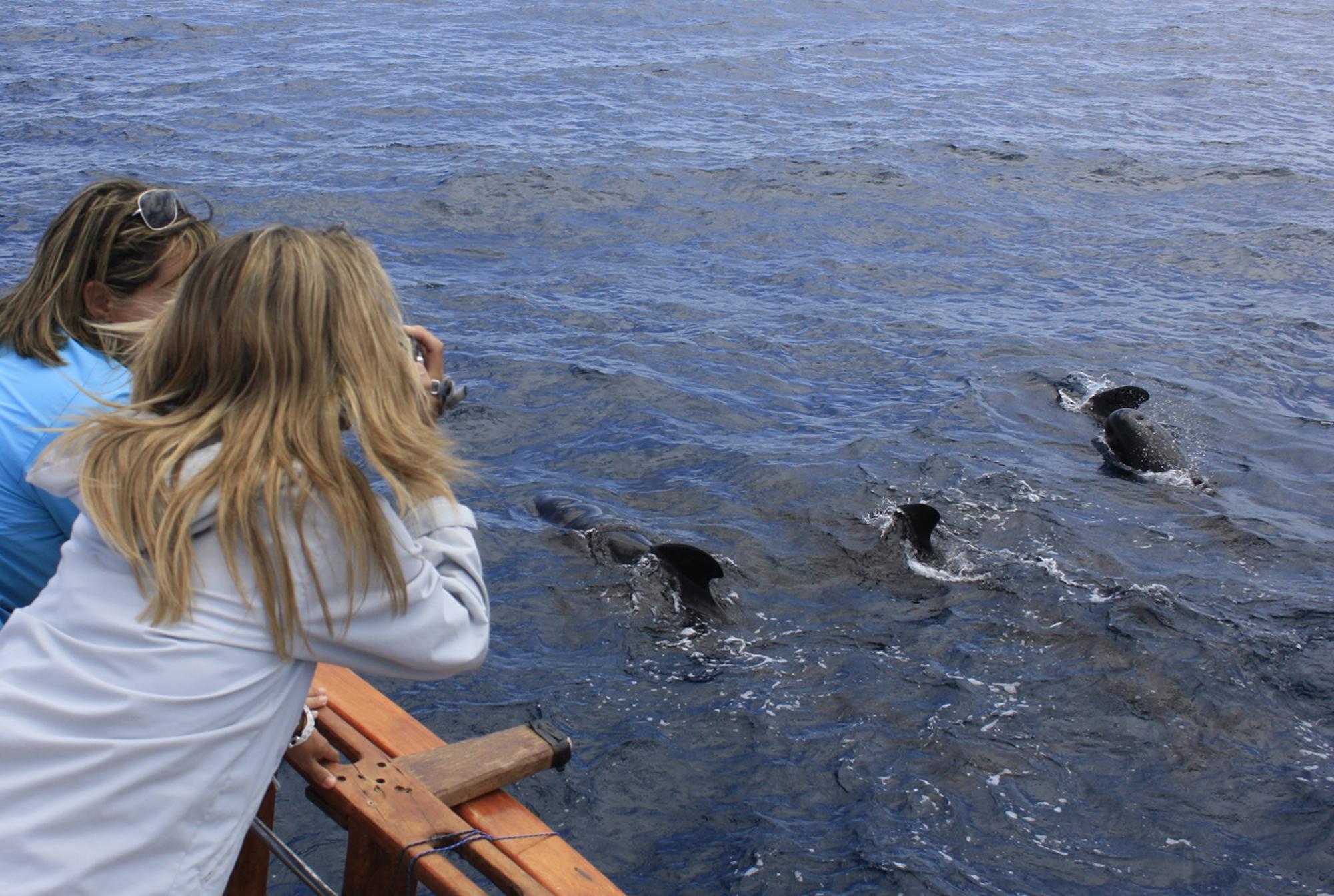 Avistar cetaceos