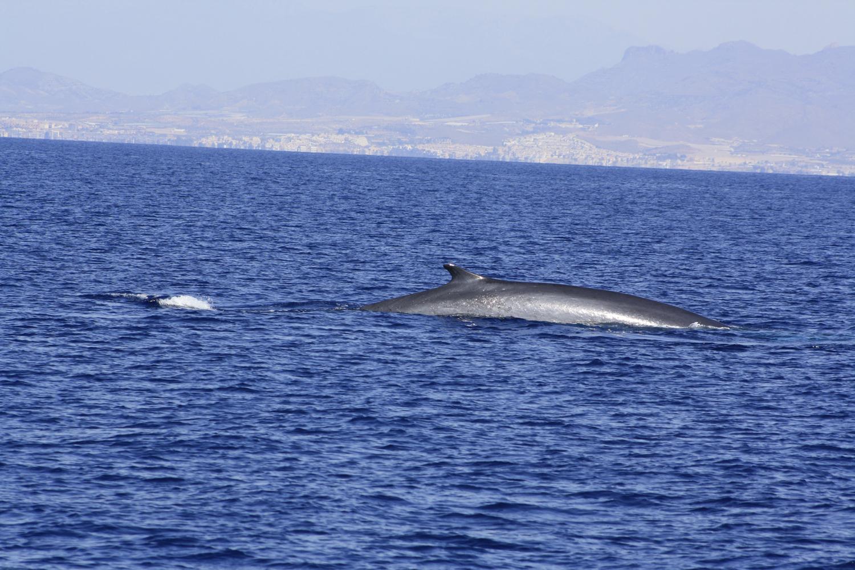 Ballenas en Mazarrón