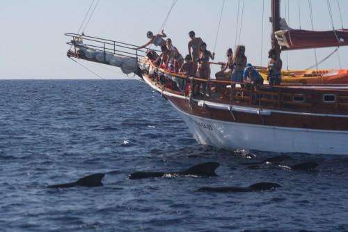 barco para ver cetaceos