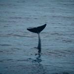 comportamiento cetaceos