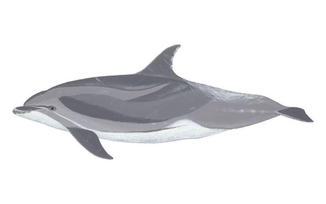 delfin-mular-delfines-de-lanzarote