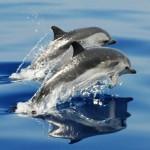 dos delfines en murcia