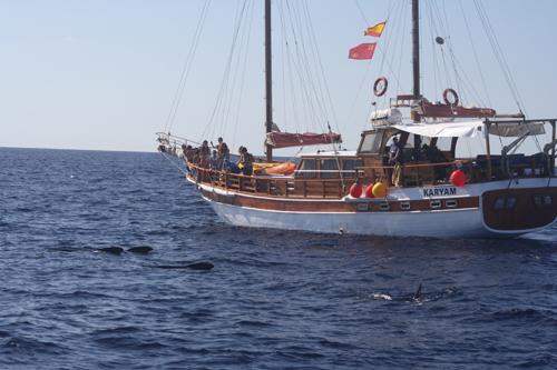 barco para ver delfines